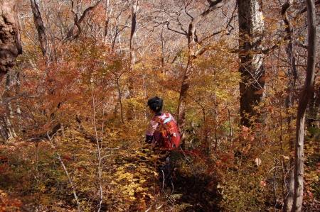 28ヤシオの森