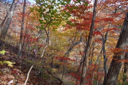 31ヤシオの森