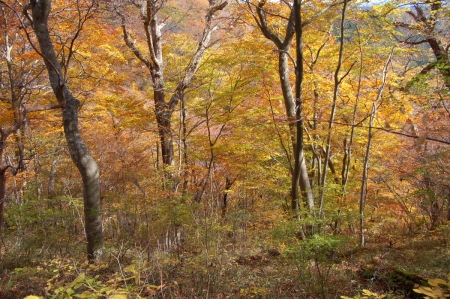 32ヤシオの森
