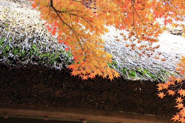 20131123仁比山神社0025