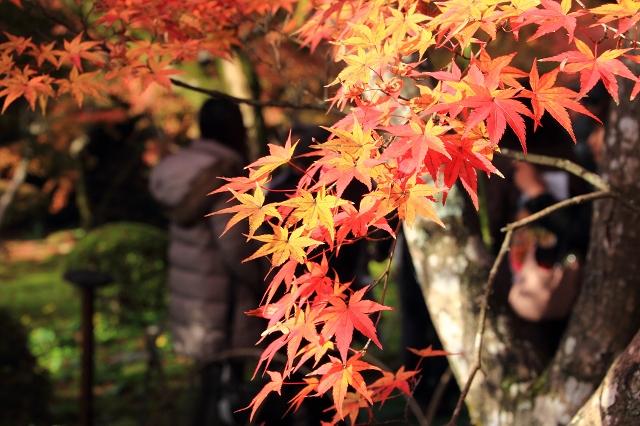 20131123仁比山神社0022