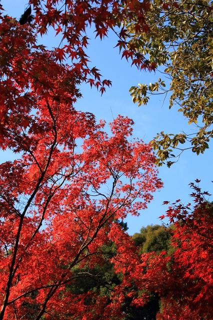 20131123仁比山神社0055