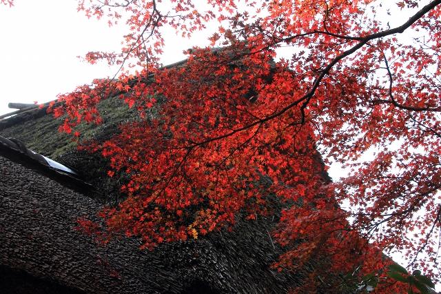 20131123仁比山神社0046