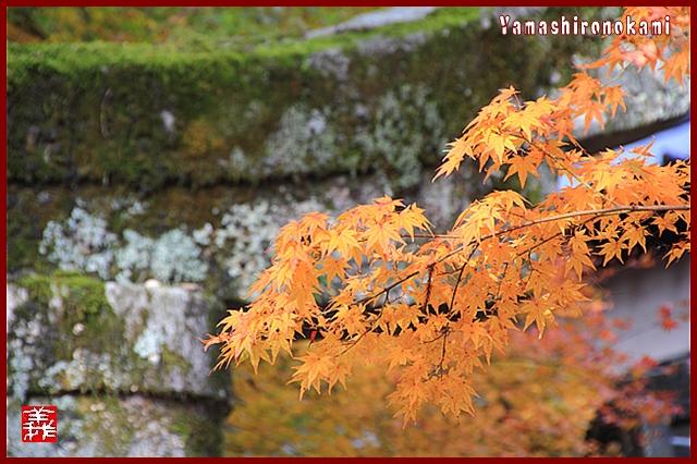 s-20131123仁比山神社0074