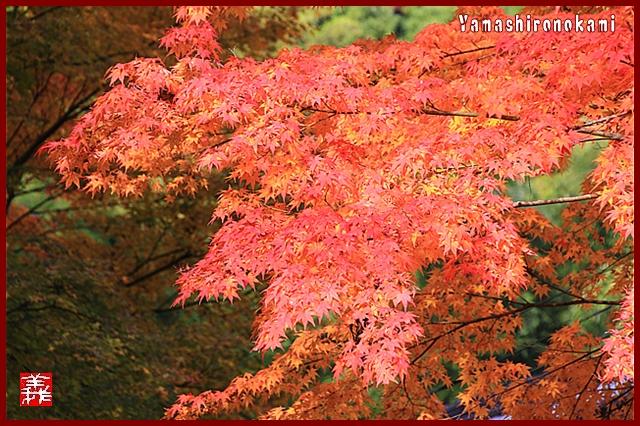 s-20131123仁比山神社0073