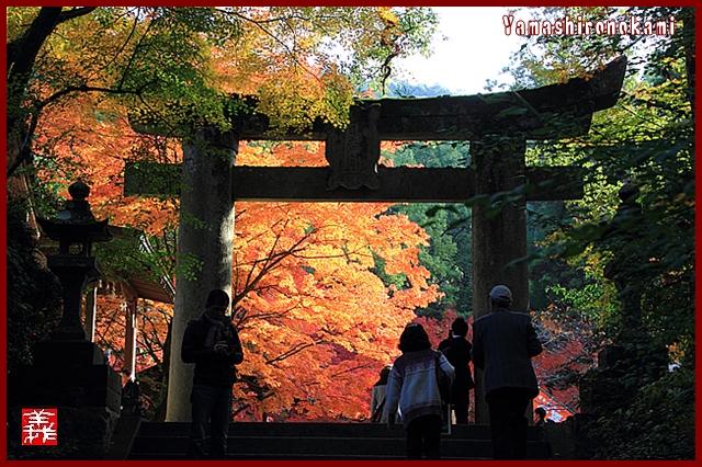s-20131123仁比山神社0068