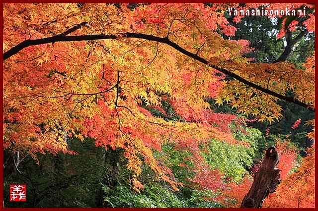 s-20131123仁比山神社0103