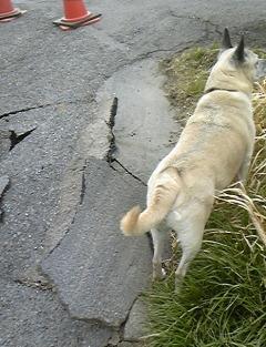 地震1.jpg0000