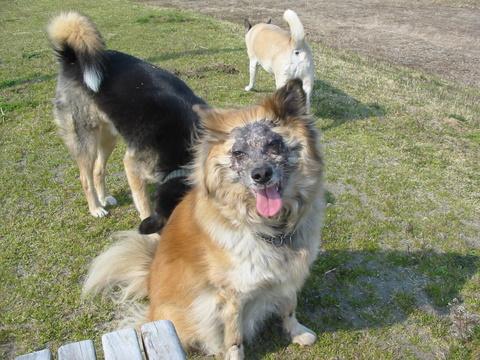 犬たち 30171