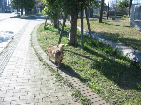 犬たち40001