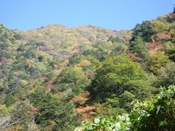 紅葉、黄葉、常緑