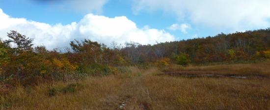 葉山手前の湿地
