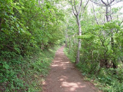 風神山の道