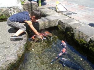 2011_0829_鯉の泳ぐ街