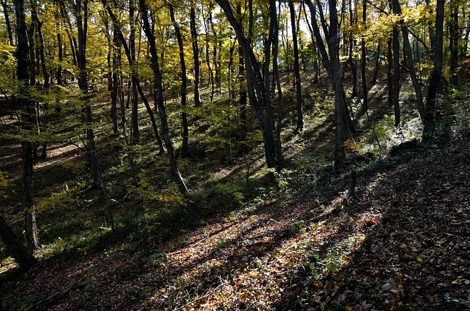 黄葉の季節1