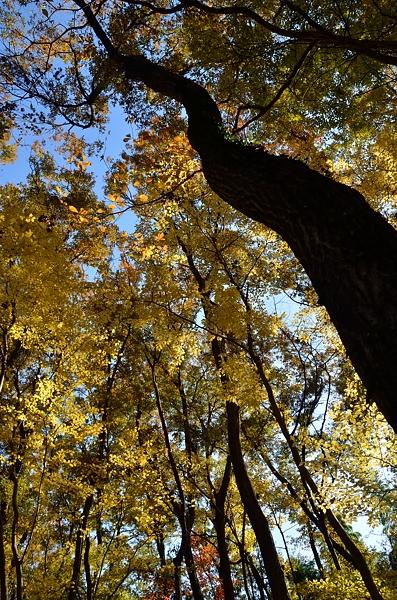 黄葉の季節2