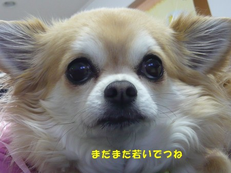 bP1060840.jpg