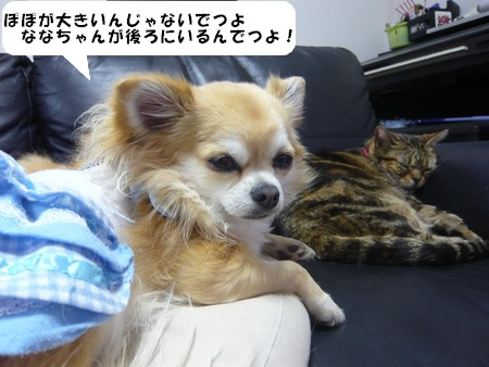 bP1070320.jpg