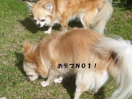 bP1080029.jpg