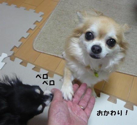bP1080376.jpg