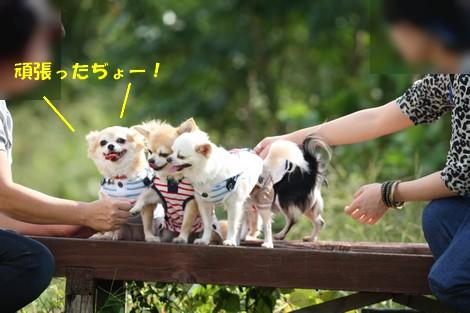 blog2N0E0409.jpg