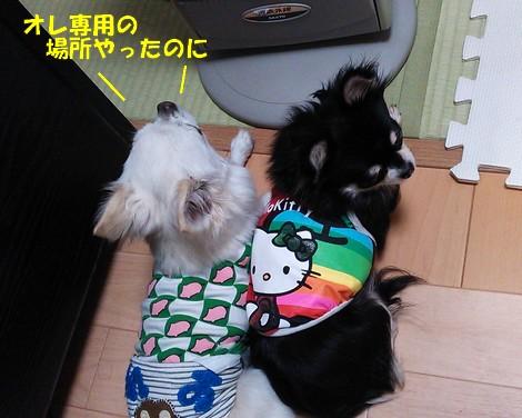 blogDSC_0977.jpg