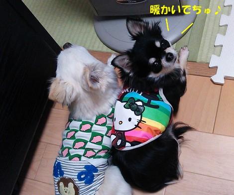 blogDSC_0978.jpg