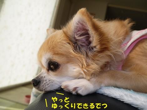 gfP1010365.jpg