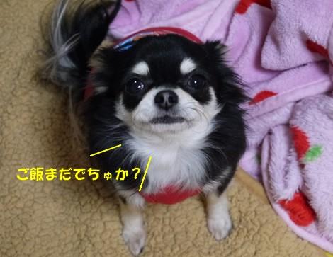 gfP1010465.jpg