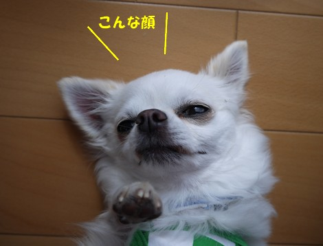 gfP1010581.jpg
