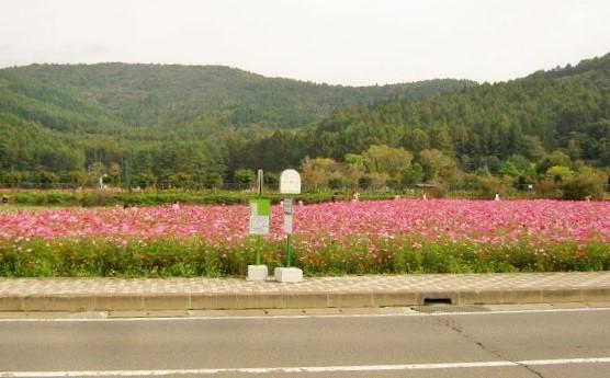 hananomiyako141012-104.jpg