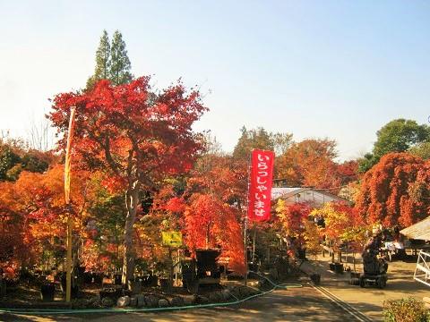 kobayashi141123-101.jpg