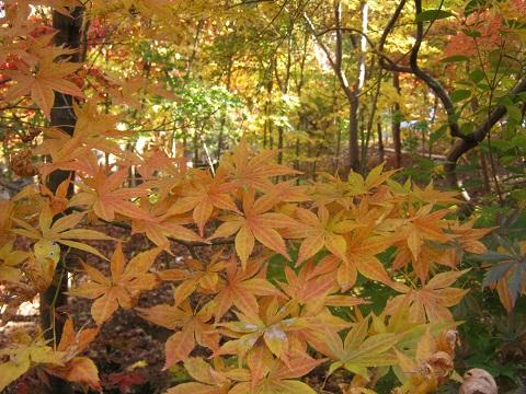 kobayashi141123-110.jpg