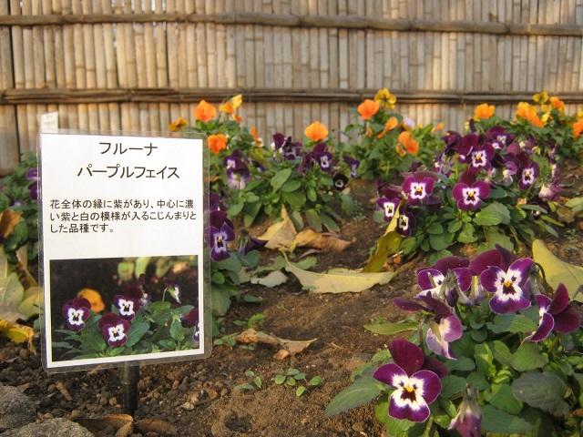 oomiyadaini131207-109.jpg