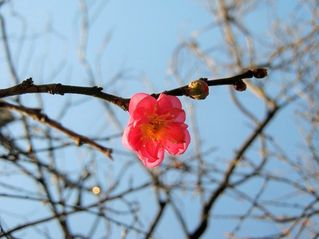 oomiyadaini141207-104.jpg