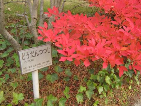 oosaki141124-107.jpg