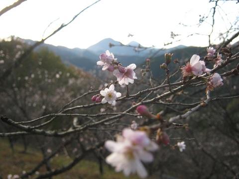 sakurayama141115-101.jpg