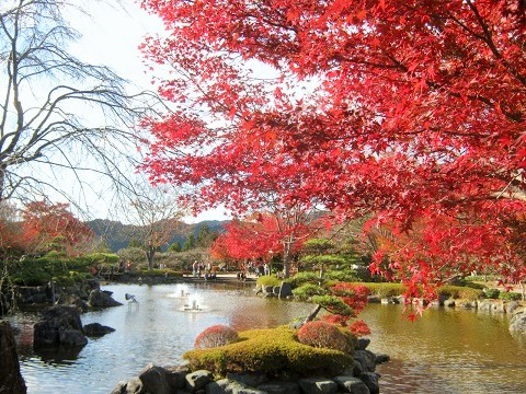 sakurayama141115-103.jpg