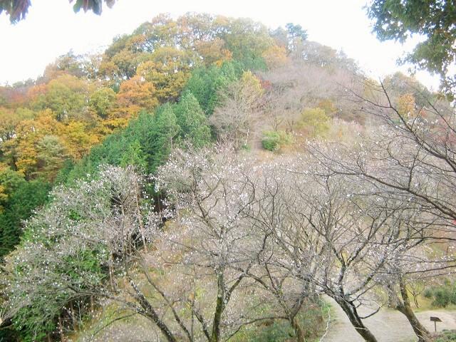 sakurayama141115-106.jpg