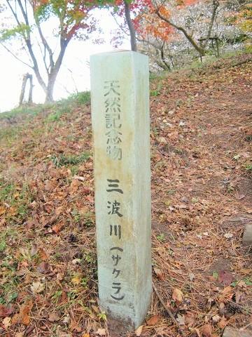 sakurayama141115-111.jpg