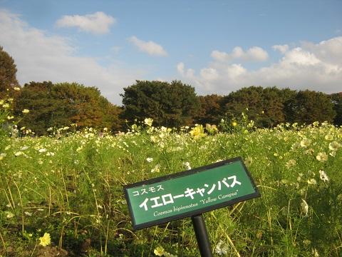 shouwa141026-102.jpg