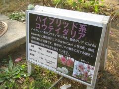 shouwa141026-136.jpg