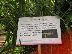 tukuba141103-123.jpg