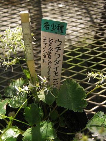 tukuba141103-129.jpg