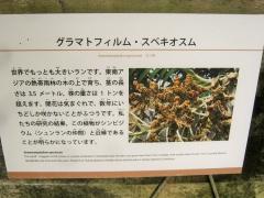 tukuba141103-159.jpg