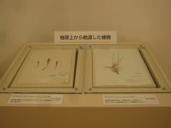 tukuba141103-166.jpg