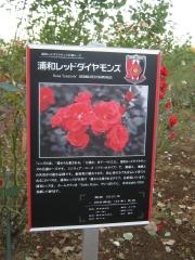yono141019-109.jpg