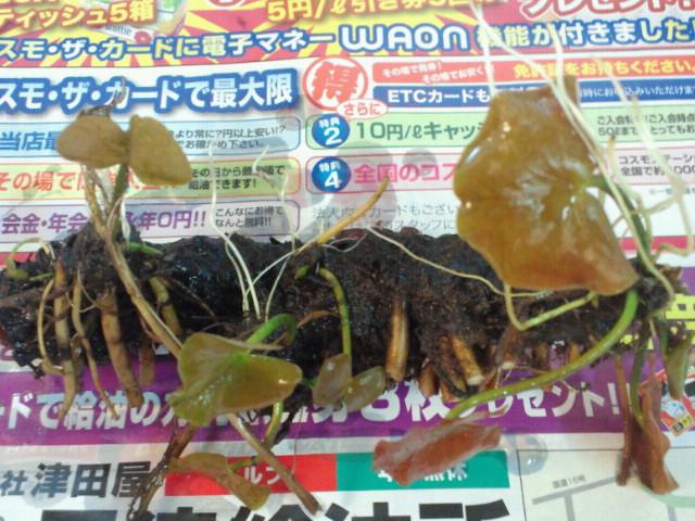 NEC_0518_20120514215321.jpg