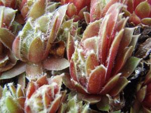 2012ピンクの花