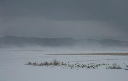 地吹雪131228